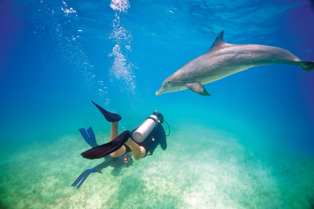 Scuba diver at Beaches Turks & Caicos, meeting local dolphin, Flint.